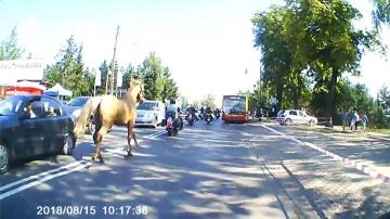 Koń zaatakował motocyklistę